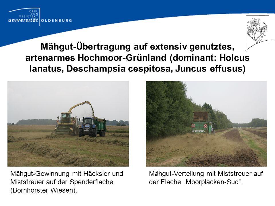 Mähgut-Übertragung auf extensiv genutztes, artenarmes Hochmoor-Grünland (dominant: Holcus lanatus, Deschampsia cespitosa, Juncus effusus)
