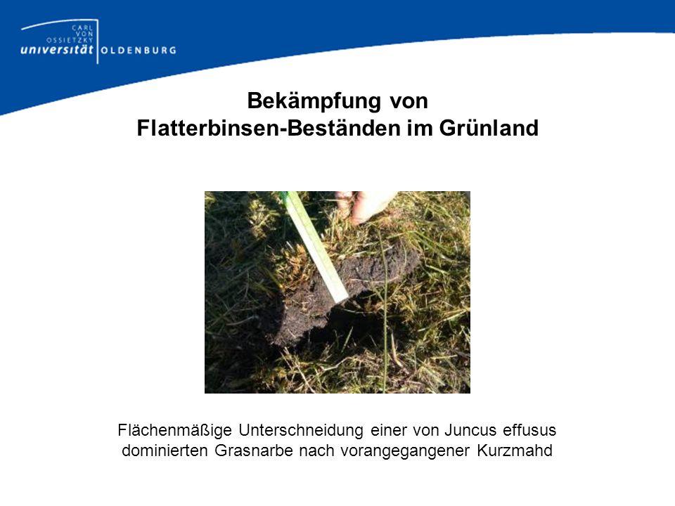 Bekämpfung von Flatterbinsen-Beständen im Grünland