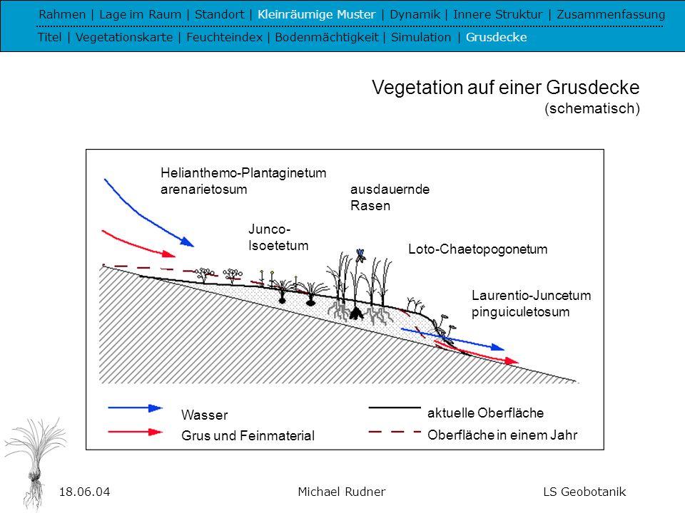 Vegetation auf einer Grusdecke (schematisch)