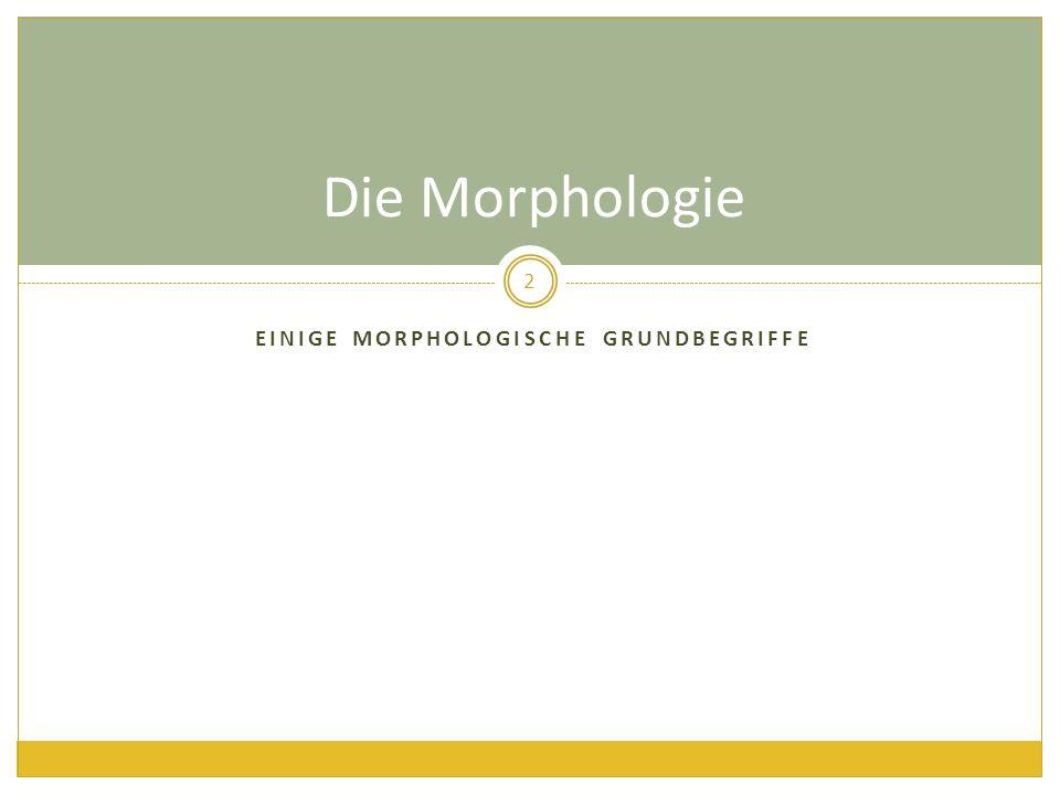 Einige morphologische grundbegriffe