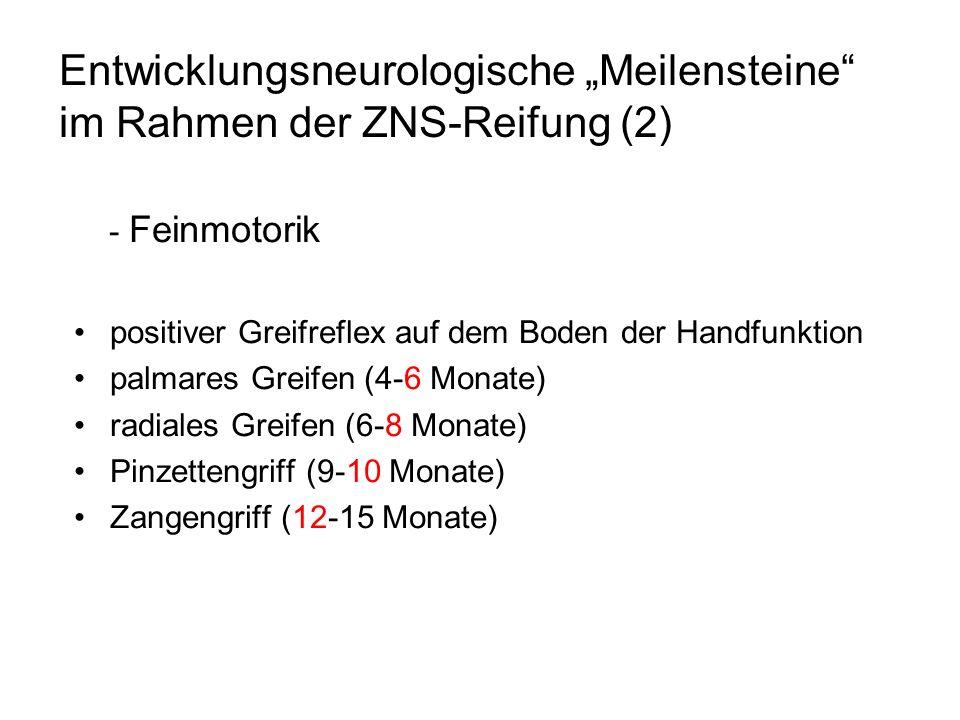 """Entwicklungsneurologische """"Meilensteine im Rahmen der ZNS-Reifung (2)"""