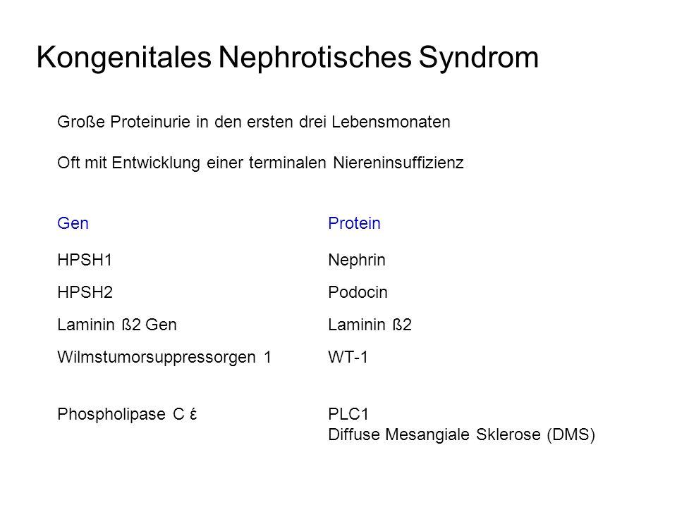 Kongenitales Nephrotisches Syndrom