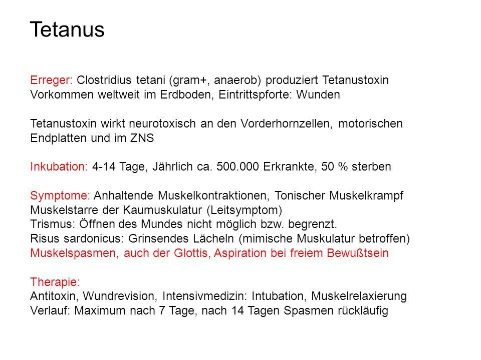 Tetanus Erreger: Clostridius tetani (gram+, anaerob) produziert Tetanustoxin. Vorkommen weltweit im Erdboden, Eintrittspforte: Wunden.