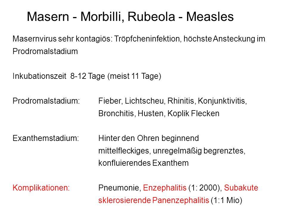 Masern - Morbilli, Rubeola - Measles