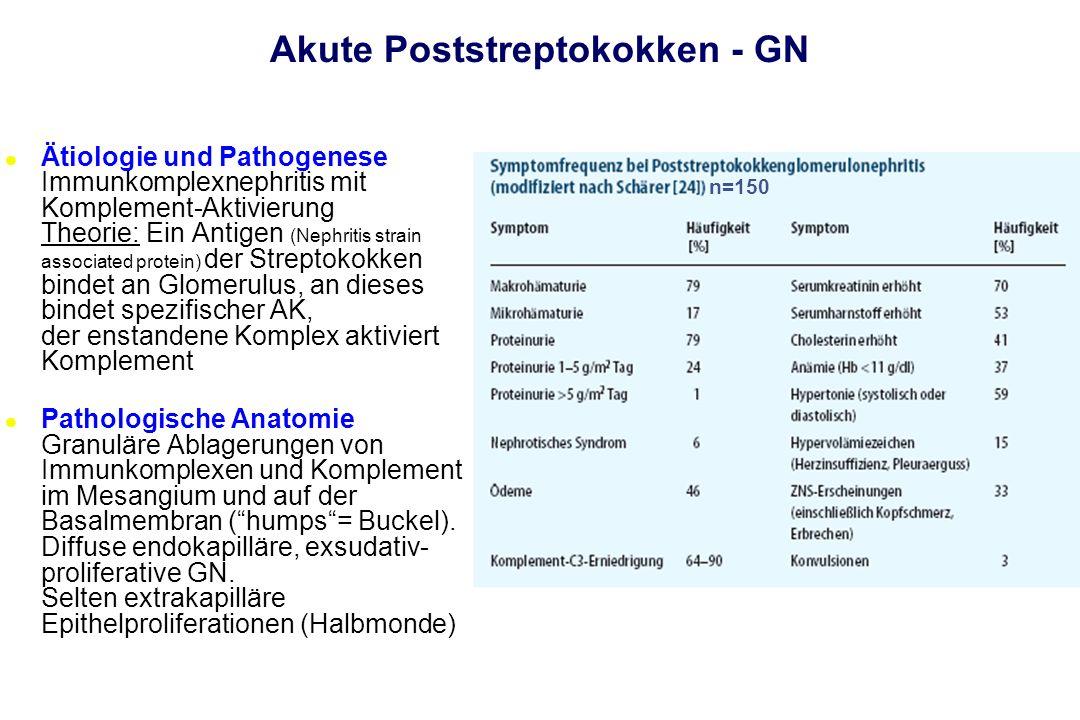 Akute Poststreptokokken - GN