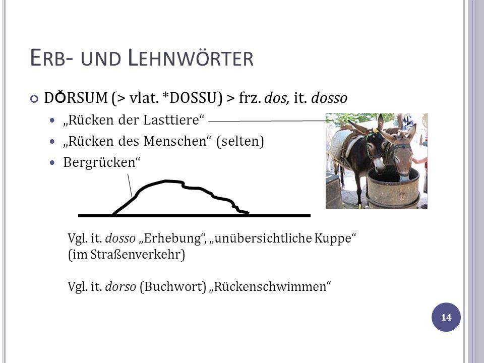 """Erb- und Lehnwörter DŎRSUM (> vlat. *DOSSU) > frz. dos, it. dosso. """"Rücken der Lasttiere """"Rücken des Menschen (selten)"""