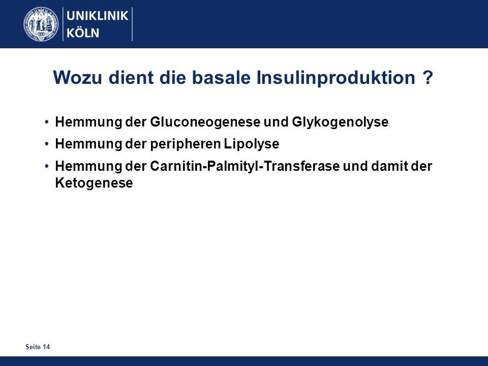 Wozu dient die basale Insulinproduktion