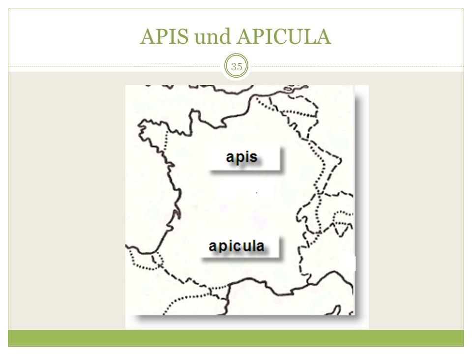 APIS und APICULA