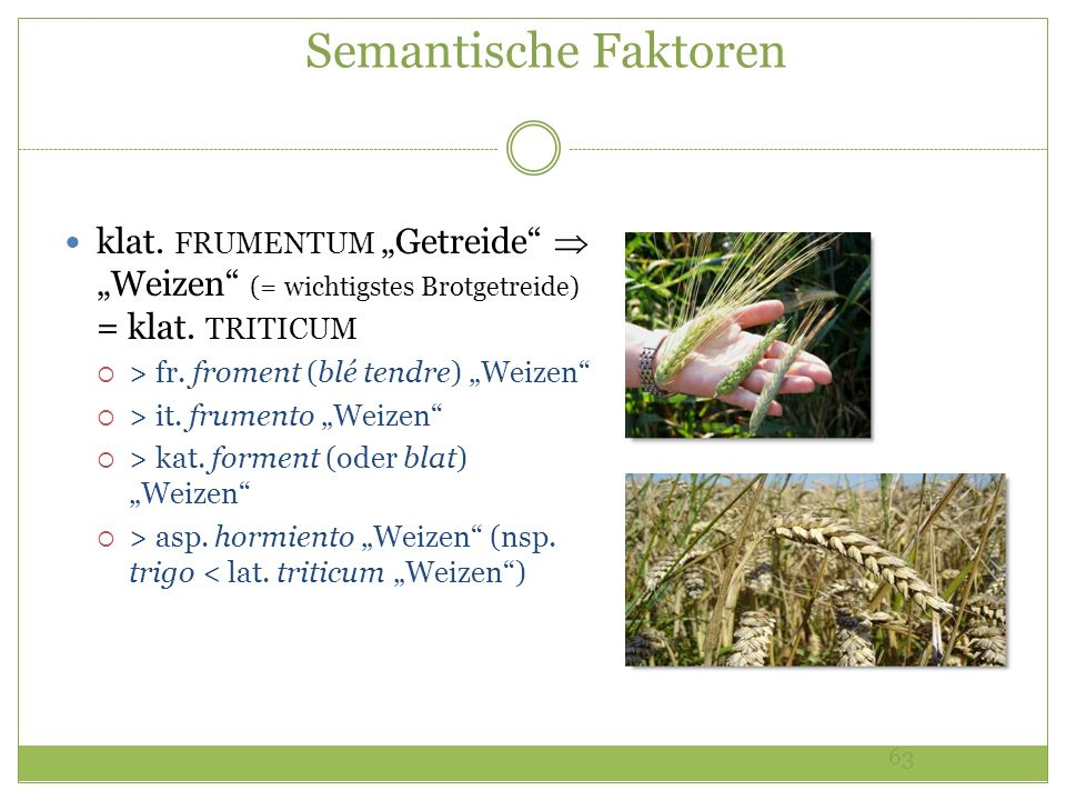 """Semantische Faktorenklat. FRUMENTUM """"Getreide  """"Weizen (= wichtigstes Brotgetreide) = klat. TRITICUM."""