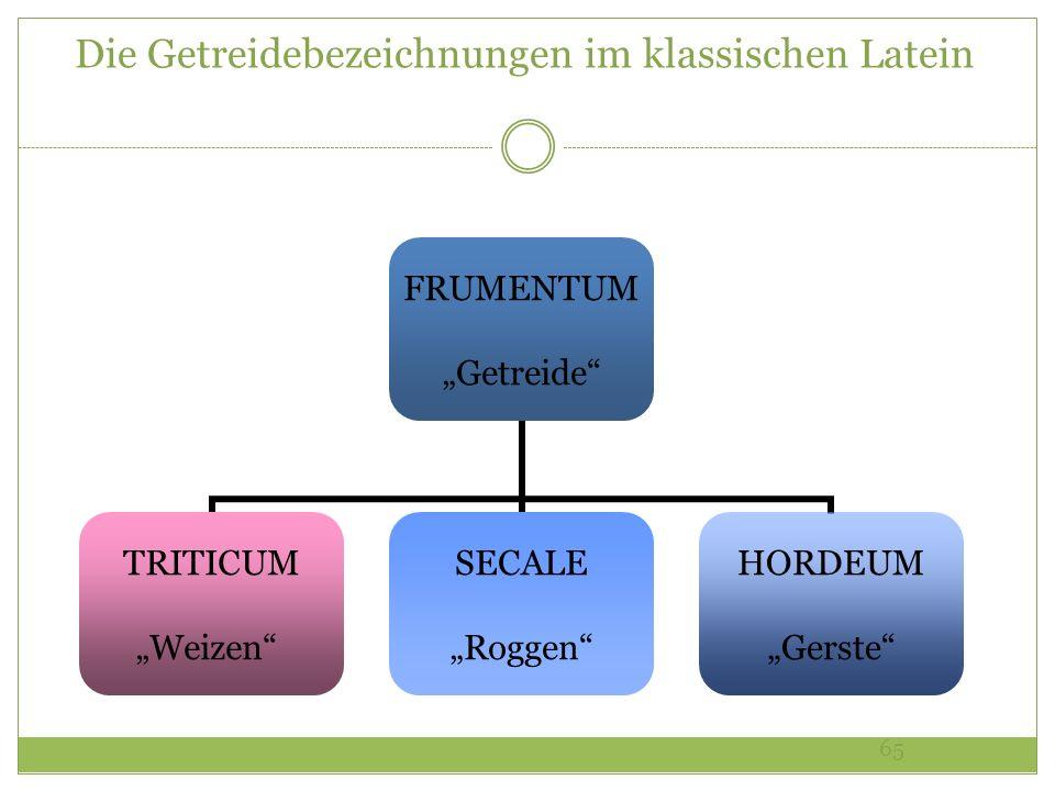 Die Getreidebezeichnungen im klassischen Latein
