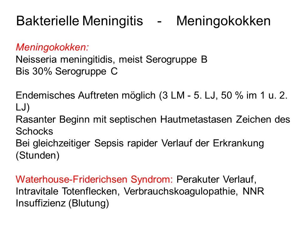 Bakterielle Meningitis - Meningokokken