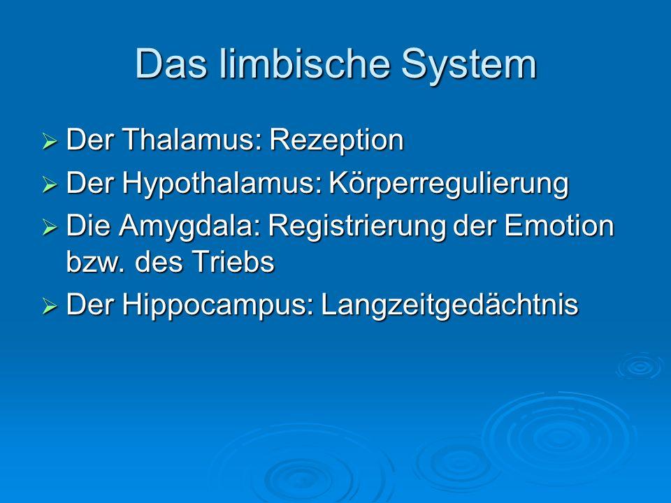 Das limbische System Der Thalamus: Rezeption