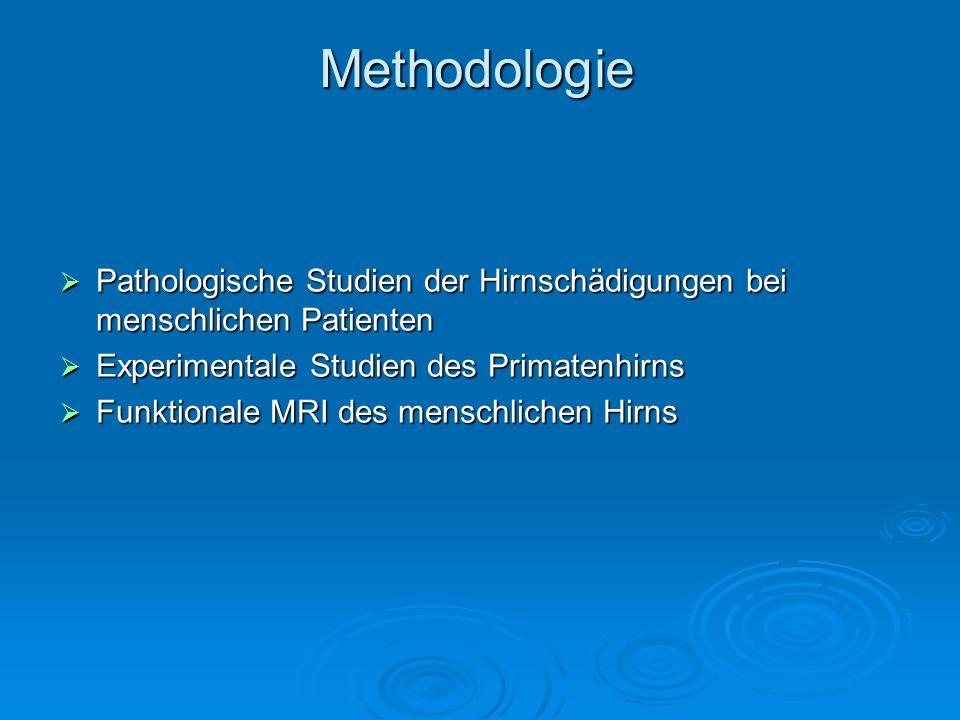 Methodologie Pathologische Studien der Hirnschädigungen bei menschlichen Patienten. Experimentale Studien des Primatenhirns.
