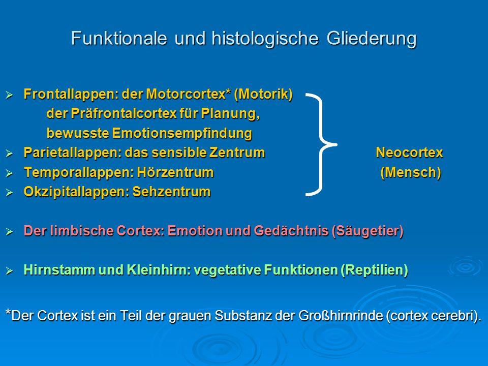 Funktionale und histologische Gliederung