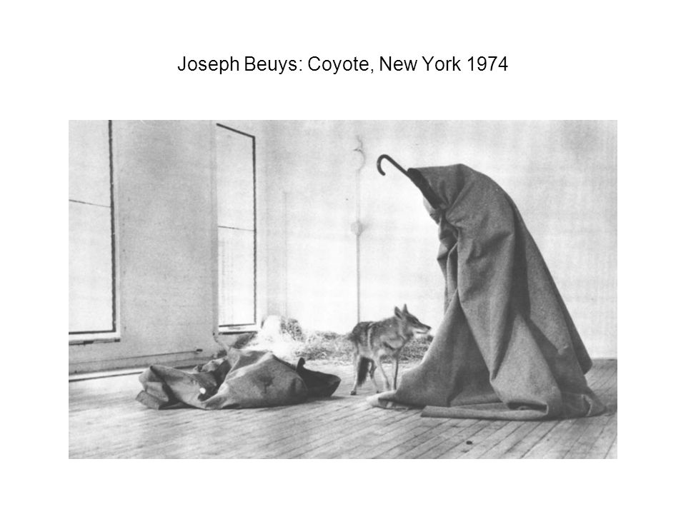Joseph Beuys: Coyote, New York 1974