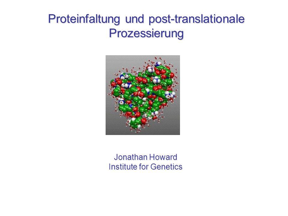 Proteinfaltung und post-translationale Prozessierung