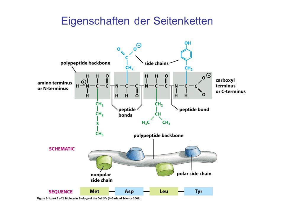 prozessieren von proteinen