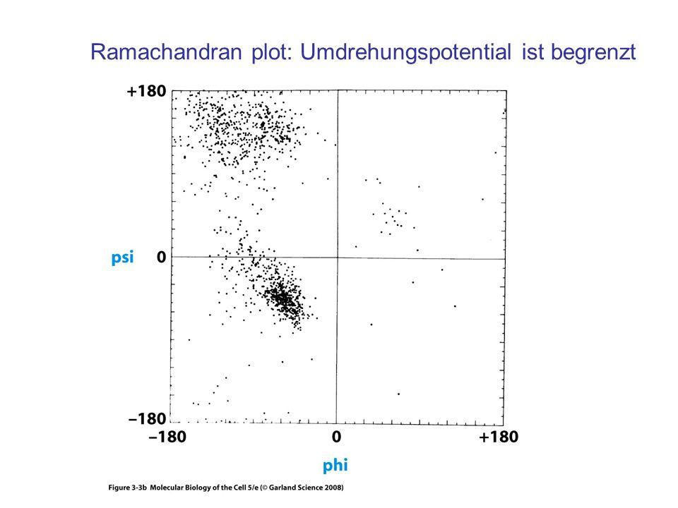 Ramachandran plot: Umdrehungspotential ist begrenzt