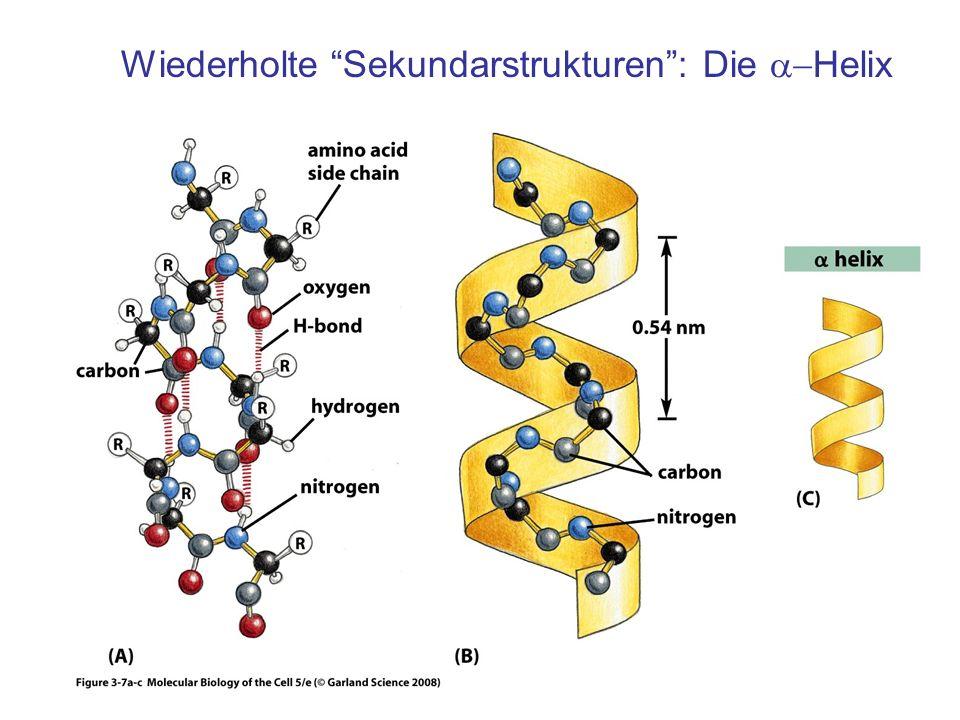 Wiederholte Sekundarstrukturen : Die a-Helix