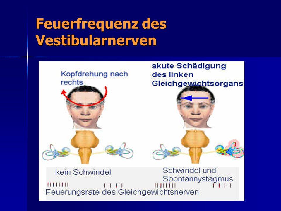 Feuerfrequenz des Vestibularnerven