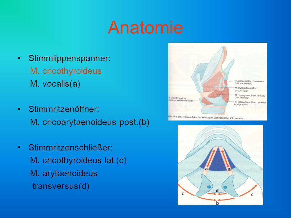 Anatomie Stimmlippenspanner: M. cricothyroideus M. vocalis(a)