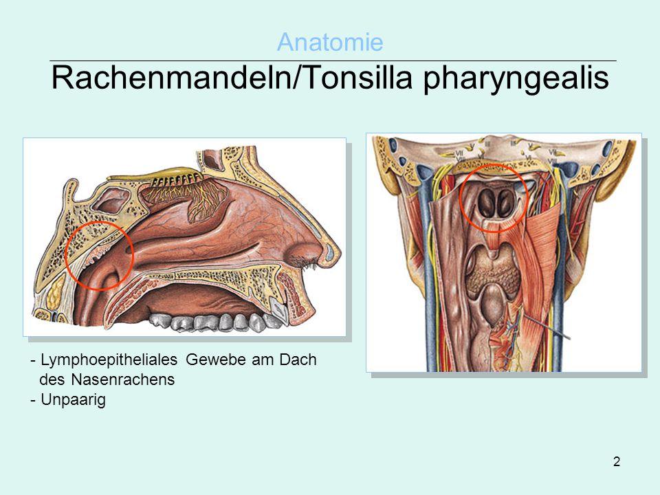 Großartig Anatomie Der Gaumen Und Rachenmandeln Zeitgenössisch ...