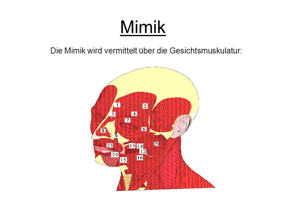Die Mimik wird vermittelt über die Gesichtsmuskulatur: