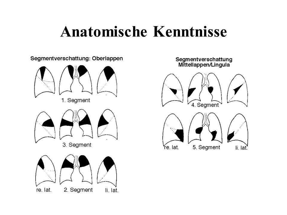 Anatomische Kenntnisse