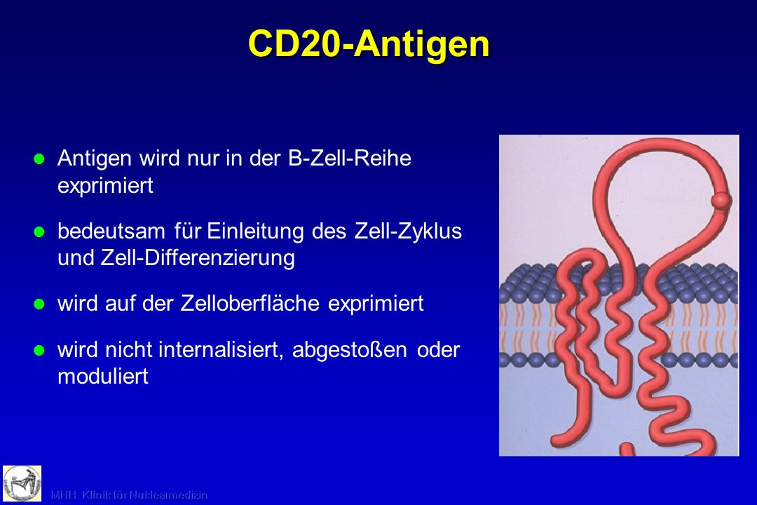 CD20-Antigen Antigen wird nur in der B-Zell-Reihe exprimiert