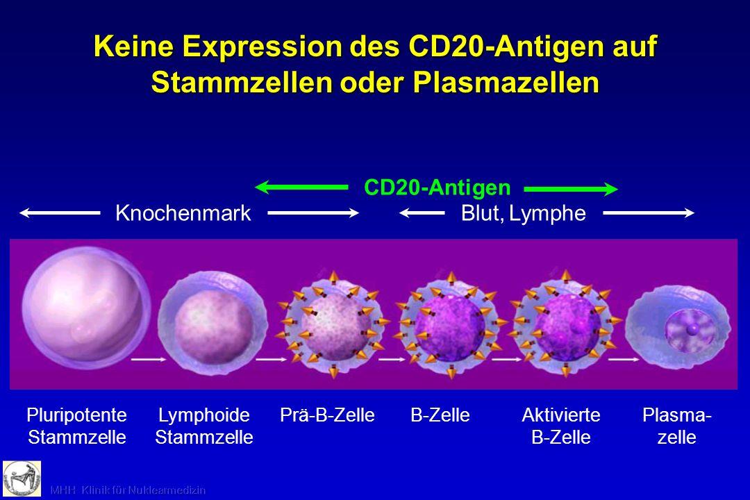 Keine Expression des CD20-Antigen auf Stammzellen oder Plasmazellen