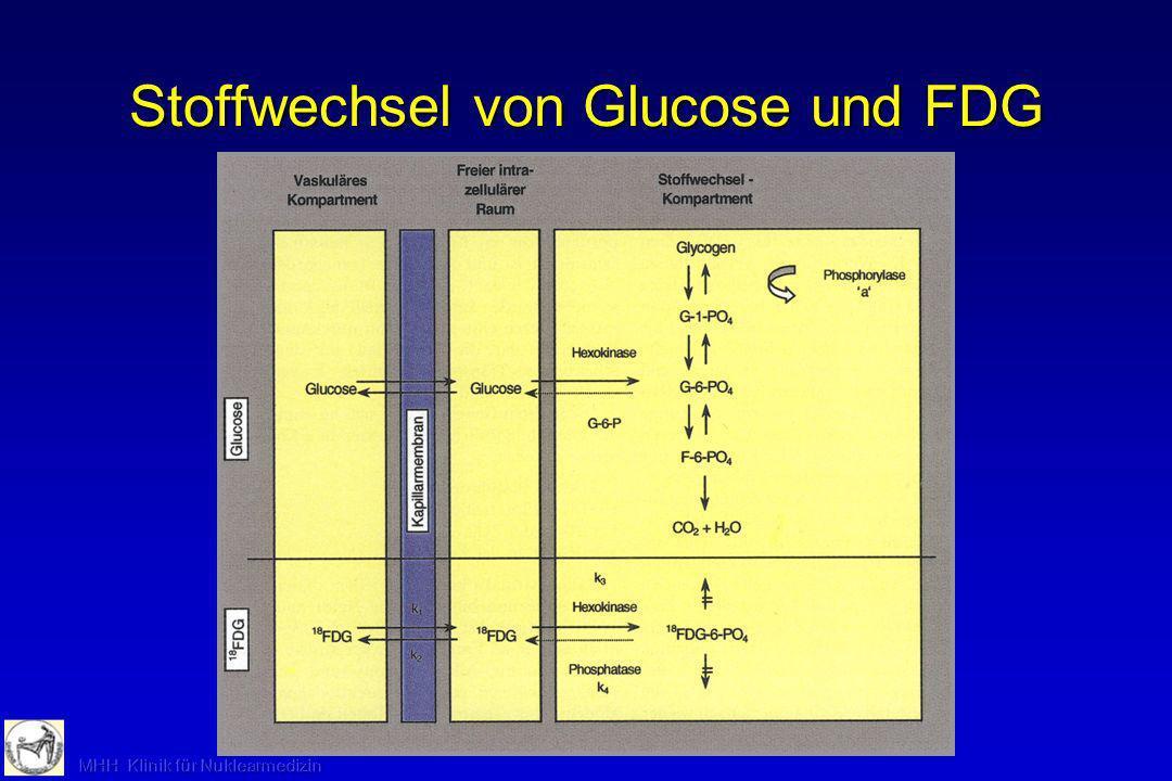 Stoffwechsel von Glucose und FDG