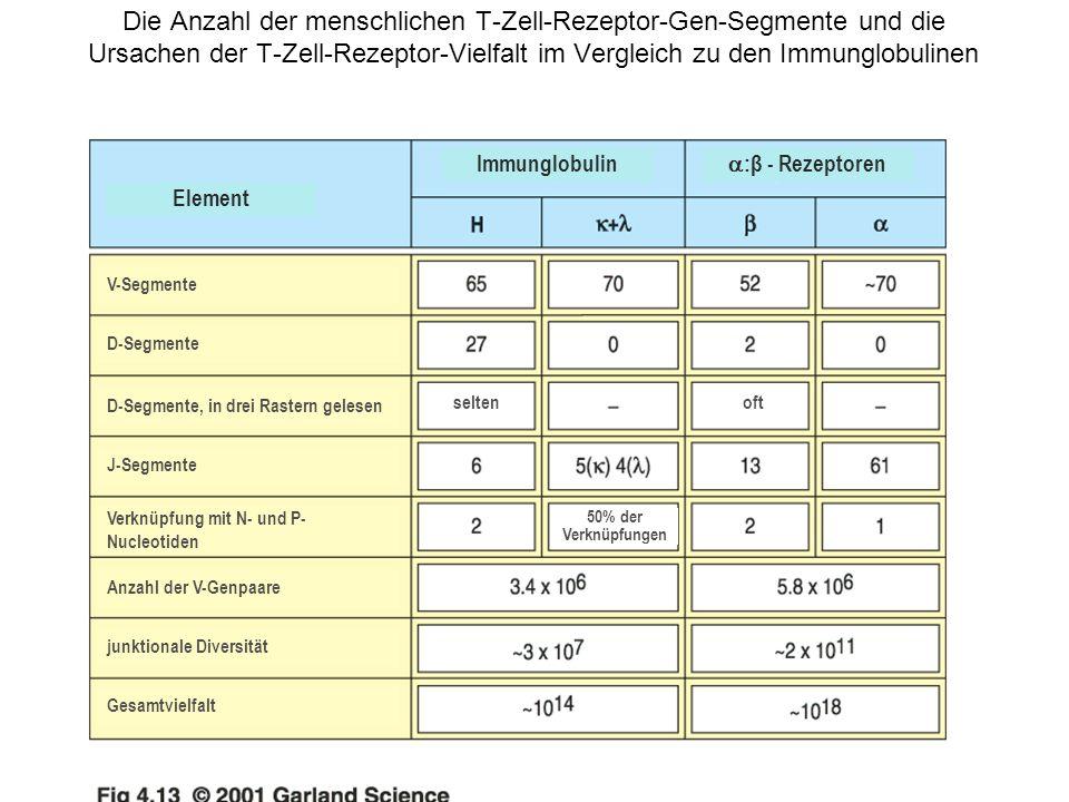 Die Anzahl der menschlichen T-Zell-Rezeptor-Gen-Segmente und die Ursachen der T-Zell-Rezeptor-Vielfalt im Vergleich zu den Immunglobulinen