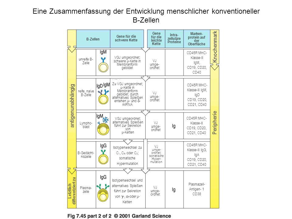 Niedlich Menschliche Anatomie Zellen Galerie - Menschliche Anatomie ...