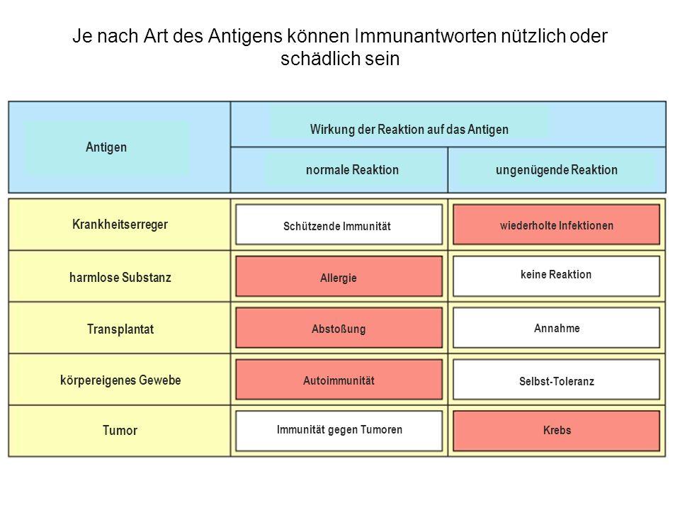 Je nach Art des Antigens können Immunantworten nützlich oder schädlich sein