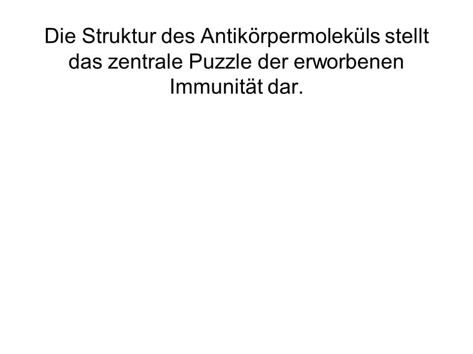 Die Struktur des Antikörpermoleküls stellt das zentrale Puzzle der erworbenen Immunität dar.