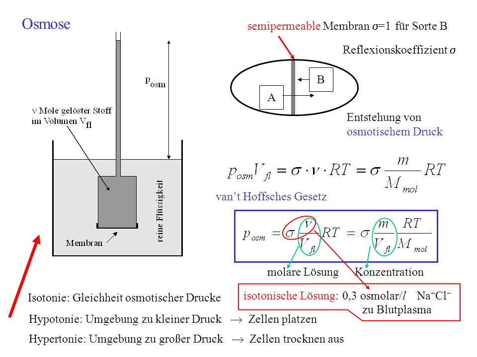 Osmose semipermeable Membran s=1 für Sorte B Reflexionskoeffizient s B