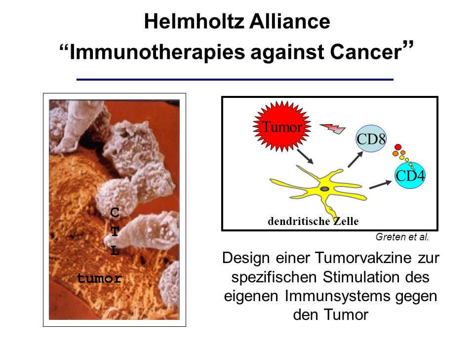 Immunotherapies against Cancer