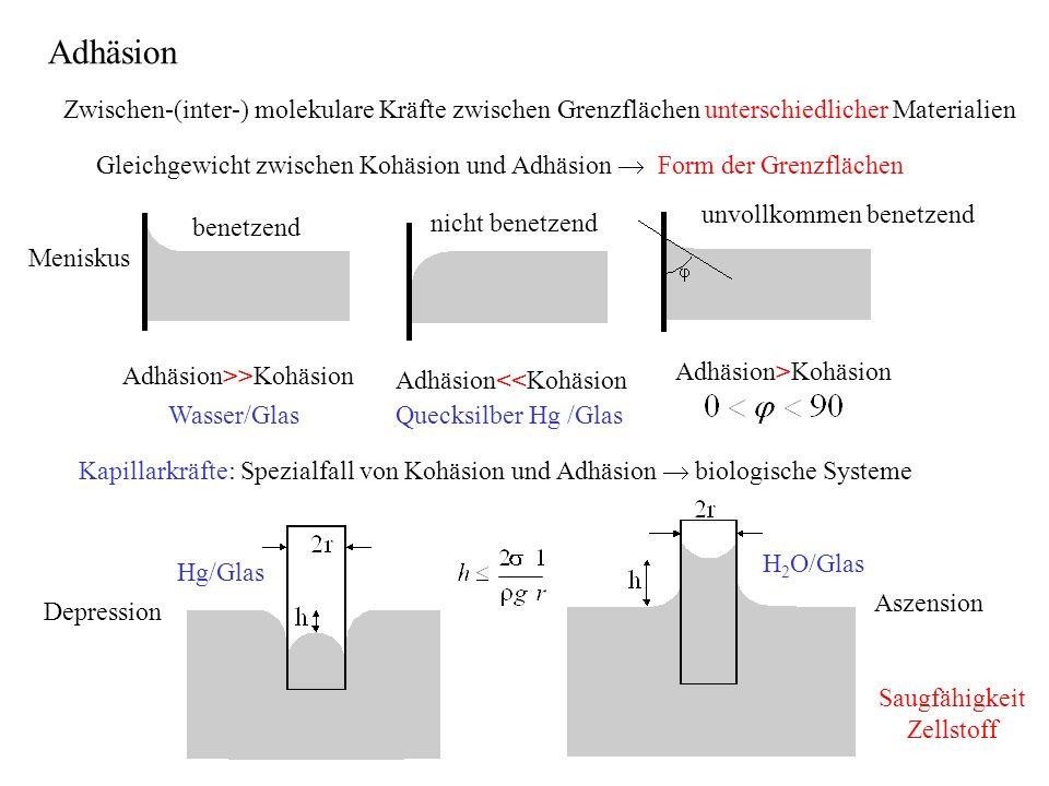 Adhäsion Zwischen-(inter-) molekulare Kräfte zwischen Grenzflächen unterschiedlicher Materialien.