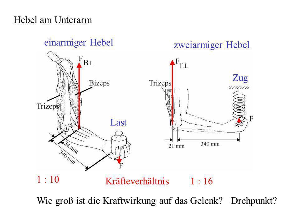 1 5 typen von kr ften a abgeleitete kr fte elastische kraft muskelkraft reibungskraft. Black Bedroom Furniture Sets. Home Design Ideas