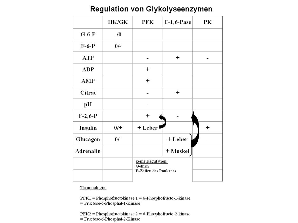 Regulation von Glykolyseenzymen