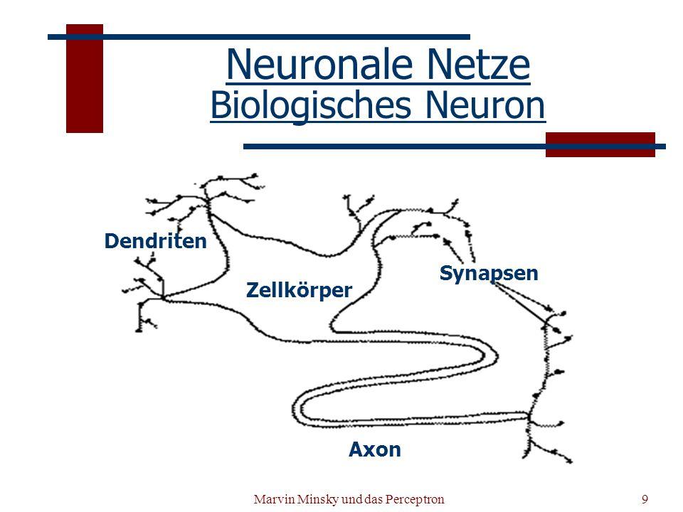 Neuronale Netze Biologisches Neuron