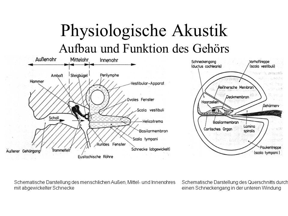 Physiologische Akustik Aufbau und Funktion des Gehörs