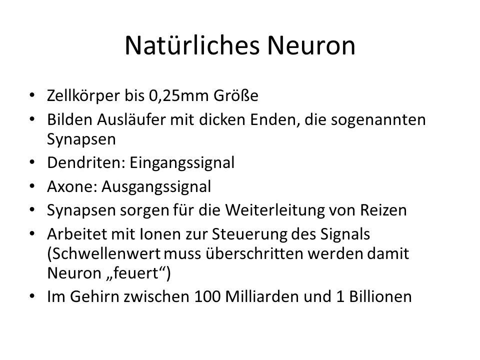 Natürliches Neuron Zellkörper bis 0,25mm Größe