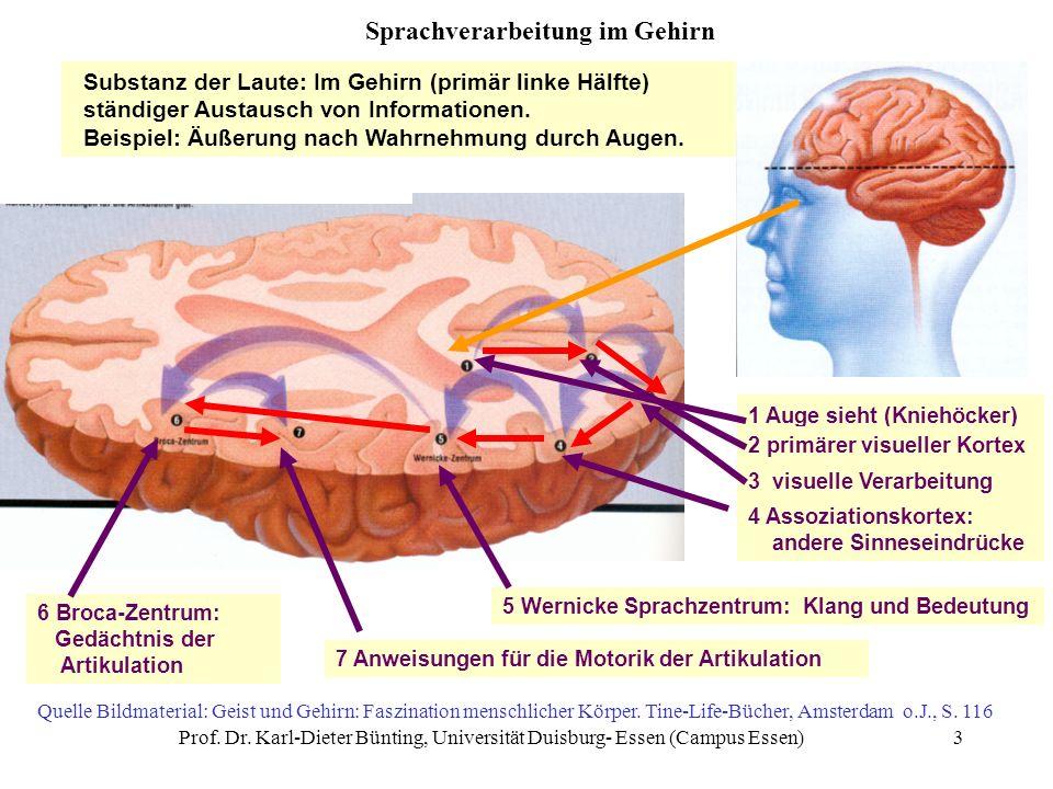 Sprachverarbeitung im Gehirn