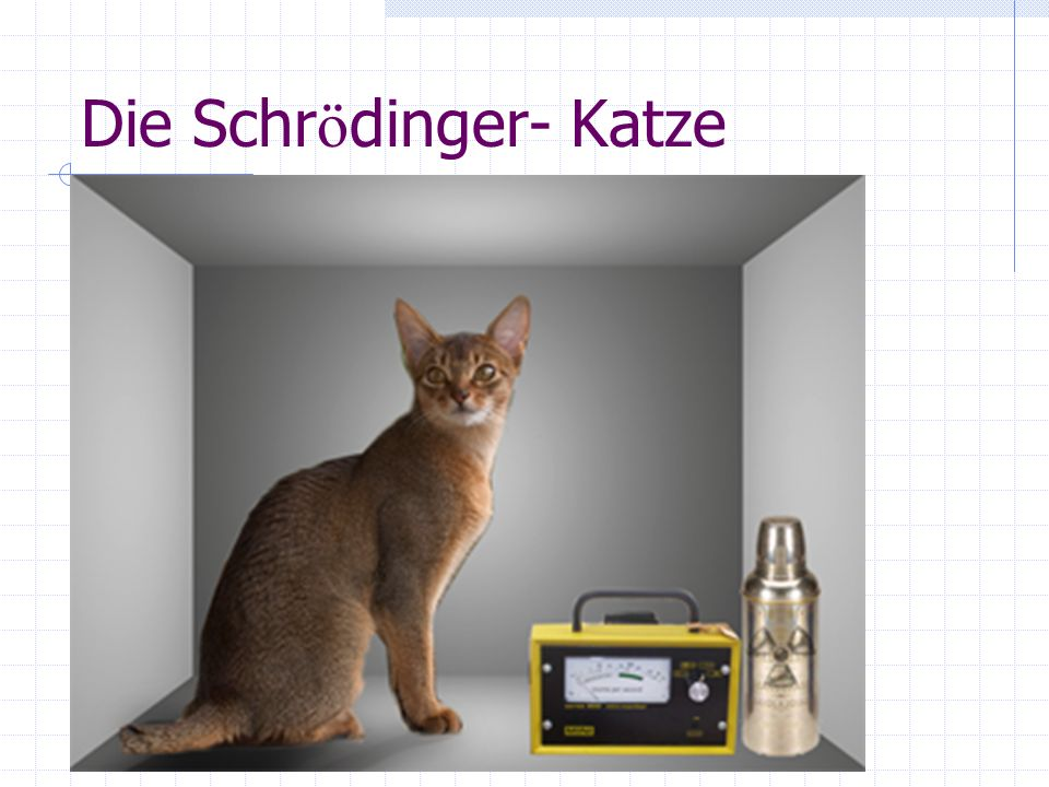 Die Schrödinger- Katze