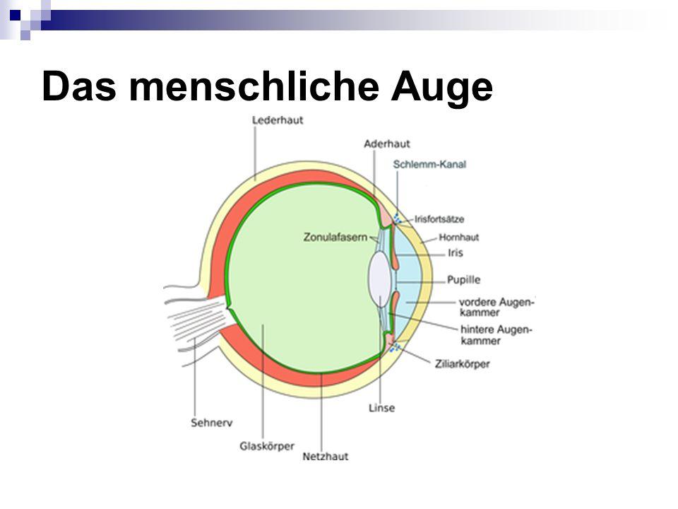 Das menschliche Auge 3 konzentrische Schichten: