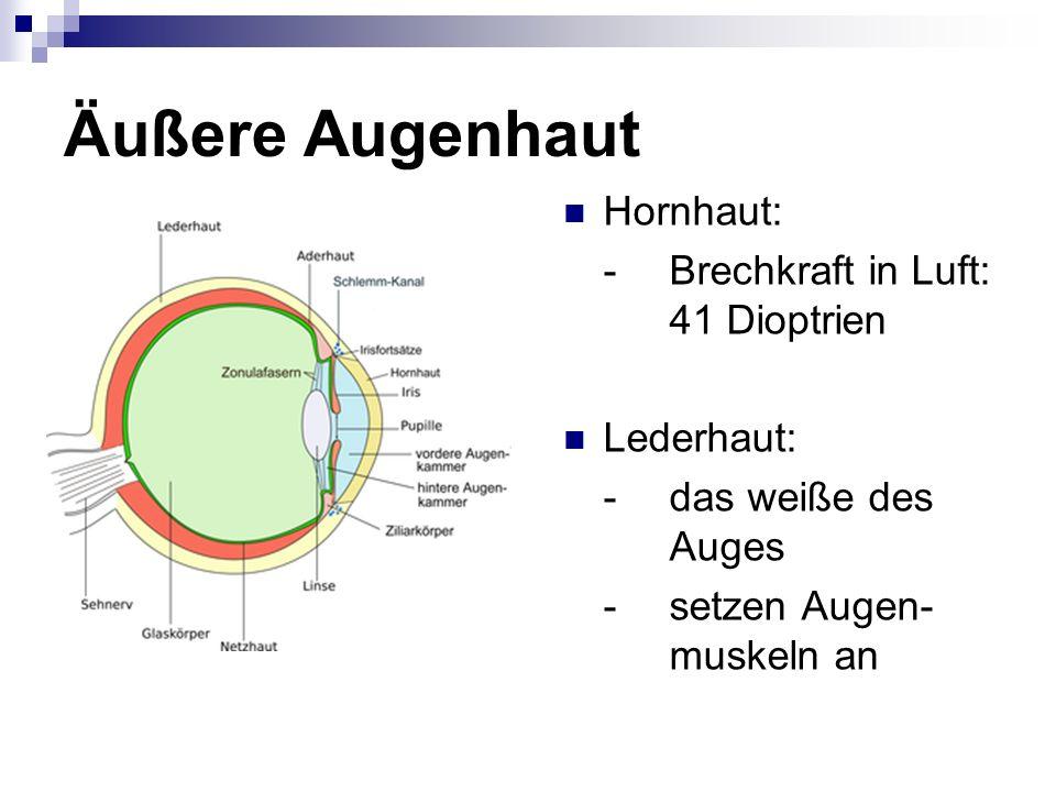 Ungewöhnlich Auge äußere Anatomie Zeitgenössisch - Anatomie Ideen ...