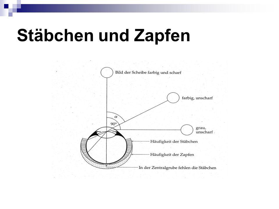 Stäbchen und Zapfen Verhältnis von Stäb. zu Zapfen auf gesamter Netzhaut 5:2. Äußerste 1,5mm breite Zonen höchste Stäbchendichte: Hell-Dunkel.