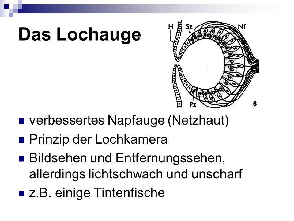 Das Lochauge verbessertes Napfauge (Netzhaut) Prinzip der Lochkamera