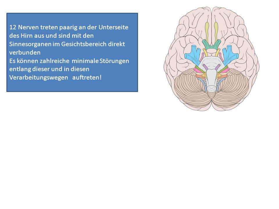 12 Nerven treten paarig an der Unterseite des Hirn aus und sind mit den Sinnesorganen im Gesichtsbereich direkt verbunden